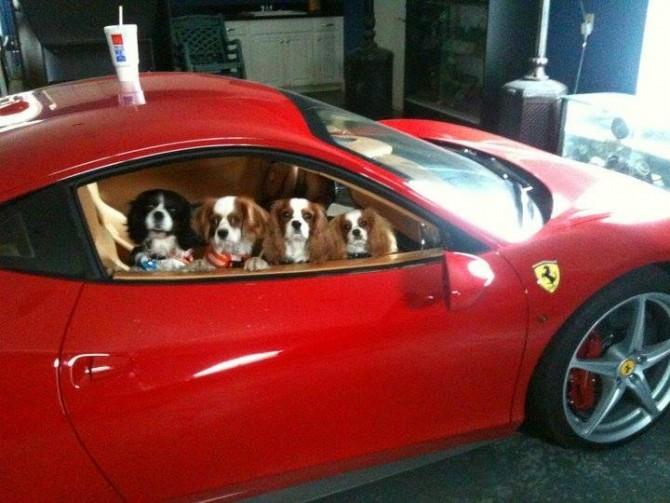 Dogs in a Ferrari
