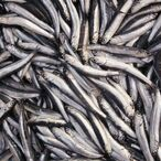 Millionaire Investor Craig Cooper Eats 5 Cans Of Sardines Every Day