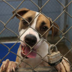 Departed Tennessee Millionaire Leaves Entire Fortune To Animal Shelter