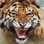 Tiger King Joe Exotic Sues The Government And Others For $94M From Prison