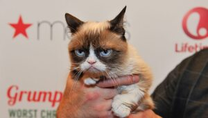 "Thumbnail for RIP ""Grumpy Cat"" :( You Wont Believe How Much Money This Feline Internet Celeb Generated During Her Life"
