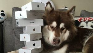 Thumbnail for Chinese Billionaire Heir Buys 8 iPhone 7 Smartphones For His Dog