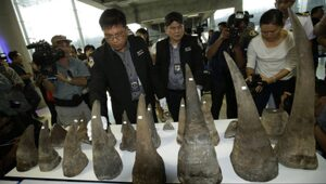 Thumbnail for Illegal Rhino Horns Worth Millions Seized By Authorities In Thailand