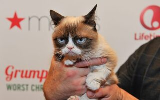 "RIP ""Grumpy Cat"" :( You Wont Believe How Much Money This Feline Internet Celeb Generated During Her Life"