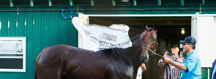American Pharoah Will Earn His Owners $35 Million In Stud Fees This Year