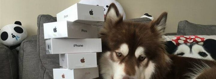 Chinese Billionaire Heir Buys 8 iPhone 7 Smartphones For His Dog