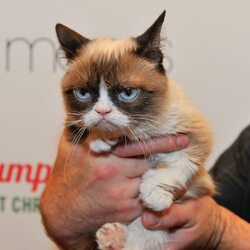 "Have You Heard Of ""Grumpy Cat""? You Wont Believe How Much Money This Feline Internet Celeb Has Generated"