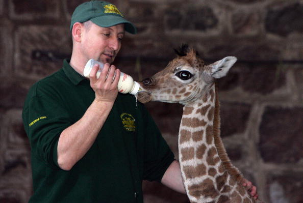 Zoologist Salary