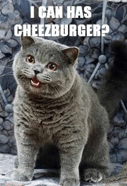 I Can Has Cheesburger